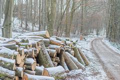 The first snow (a7m2) Tags: holz perchtoldsdorf viennawoods parabluiberg heide föhrenberge wandern joggen snow forstweg forestroad weitwanderweg