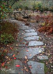 One Of Many... (angelakanner) Tags: canon70d tamron18400 path bayardcuttingarboretum longisland bridge flagstone autumn leaves