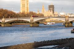 The cormorant (Toftus Photography) Tags: london england unitedkingdom gb landscape landskap outdoor cityscape farve color sun sunshine sunlight sol autumn høst etterår season himmel skyer sky clouds canon eos 5d mark iv