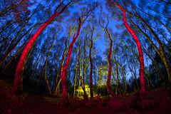 Budby Blues (Waving lights in the dark) Tags: budby forest sherwood sherwoodforest woods fisheye fisheyelens blue bluehour sky nightlandscape lazy blues landscape samyang samyang12mm
