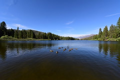 Hume Lake, King's Canyon, California, US August 2017 076 (tango-) Tags: us usa america unitestates statiuniti