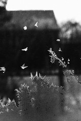 IMG_1987 (andreyassq) Tags: winter birds white black whiteandblack window snow water nature photographer photography atmosphere atmospheric magic