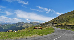 horses on Col d'Erroymendi 2015 (matthias416) Tags: paysbasque baskenland col pass berg mountain montagne landscape landschaft sky himmel clouds wolken pferde nikon horses chevaux pyrenäen pyrenees pyrénées