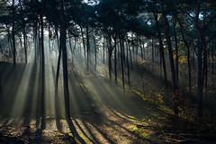 Sunrays welcome the winter (WeVe1) Tags: sunrays goldcollection mist fog brume nebel brumeux misty