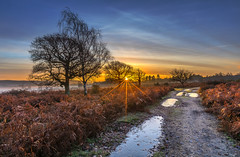Bracken Path (nicklucas2) Tags: cloud cold sunrise sun sunburst landscape newforest hampshire mogshade tree