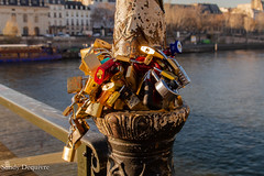 IMG_0086 (sandy.dvre) Tags: pourpre