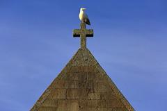 Heidnisch (ploh1) Tags: kirche kreuz tier heidnisch himmel england uk gb grosbritannien bauwerk hoch oben newquay möwe