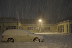 Whites in white (しまむー) Tags: pentax k30 smc da 1850mm f456 dc wr re snow storm