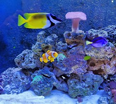 Photo of Fish in Tank