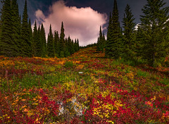 Nature's Quilt (Walter Levin) Tags: rockymountains montana fall foliage mountains colorful sunlight clouds trees view scenic
