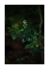 This work is 4/12 works taken on 2019/10/26 (shin ikegami) Tags: sony ilce7m2 a7ii sonycamera 50mm lomography lomoartlens newjupiter3 tokyo 単焦点 iso800 ndfilter light shadow 自然 nature naturephotography 玉ボケ bokeh depthoffield art artphotography japan earth asia portrait portraitphotography
