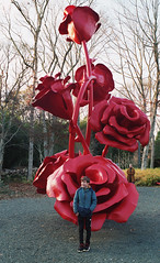 Long House Reserve (neilsonabeel) Tags: nikonfm2 nikon nikkor film analogue longisland newyork suffolkcounty longhousereserve sculpture art rose flower