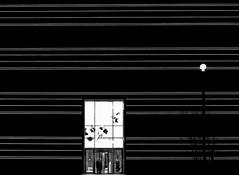 light stripes (heinzkren) Tags: schwarzweis blackandwhite biancoetnero noiretblanc monochrome stripes streifen lichtstreifen lines linien eingang door museum germany urban weimar ars abstract night entree facade canon eosr minimal outside building architecture architektur gebäude laterne people structures tree baum innamoramento minimalismus minimalism