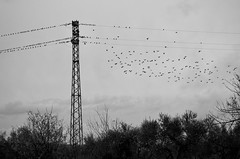 (adrianamicheli.84) Tags: fly birds cloudy sky country landscape bnw d5100 nikon