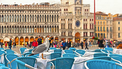 st mark's (poludziber1) Tags: street venice italy people gull