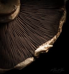 Mushroom (milan_146) Tags: mushroom lowkey funghi light shadow shape macro closeup nikon d7100 nikkor105mmf28gvrmicro lookingcloseonfriday