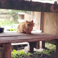 Hampton, VA Operation Legacy (Travis Manion Foundation) Tags: cat rescue