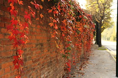 Venice Lido in Autumn (sumi!) Tags: italy lido autumn leave venice venezia