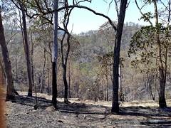 Australia - 2019 fires - Monsildale near Kilcoy Queensland (Big Brisbane Boy) Tags: australia queensland kilcoy monsildale fires bush black trees hills burnt