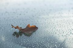 Une feuille et son reflet *-*--+° (Titole) Tags: droplets leaf oak titole nicolefaton windscreen parebrise 15challengeswinner miksang friendlychallenges