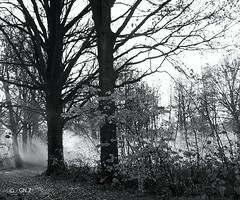 Warming up! (Greet N.) Tags: forest fog trees cold morning november footpath blackwhite drenthe