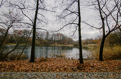 W a t e r (0sire) Tags: autumn fall lake water trees nature park oaklandlakepark queens nyc newyorkcity overcast cloudy