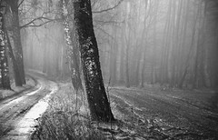 (Małgorzata M-K) Tags: jesień mgła las mrok forest nature naturephotography bw dark fog foggy blackandwhite tree autumn