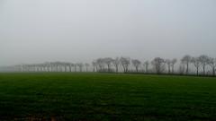 ZUIDWOLDE, THE NETHERLANDS (pwitterholt) Tags: zuidwolde groningen mist fog trees bomen winter groen green sony sonyhx400 sonycybershot horizon