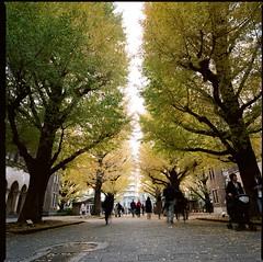 2019/12/01 The University of Tokyo (Vic Tsai) Tags: hasselblad 503cw carl zeiss distagon t 40mm f4 cf fle kodak professional portra 160 film tokyo