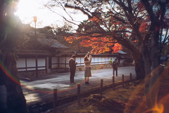 The Last Leaves, Kyoto (Nathan MacDonough Photography) Tags: leica sl canon 50mm f095