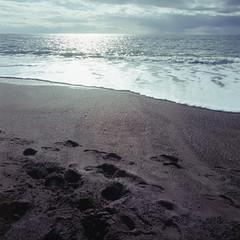 2019-11 H C R04 005 (kccornell) Tags: point reyes marin california beach coast pacific ocean hasselblad 500c 120 6x6 medium format film kodak portra 400 color