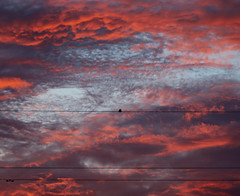 Bird charging (JaaniicB) Tags: canon eos 77d 100mm f28l macro summer sunset electricity cable bird clouds red blue