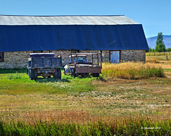 Old Friends_190377 (rjmonner) Tags: agriculture agricultural agronomy agronomic antique aged antiquity acreage acres architecture antiques auto ancient axle austere barn blue bygonedays country dilapidated dormant exposed earth explore exploration elevation farm farming fence field farmstead farmland farmyard green grass homestead history happytruckthursday junker jalopy nikon land metal neglected natural outdoors old outbuildings pastoral quaint quiet tranquil rural relic rustic truck texture truckthursday usa vintage vanishing vehicle yesteryear yard