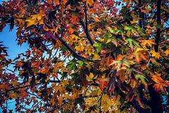 The business of seasons (Melissa Maples) Tags: antalya turkey türkiye asia 土耳其 apple iphone iphonex cameraphone winter atatürkculturepark green red gold leaves autumn tree