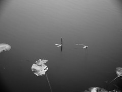 water abstract (Darek Drapala) Tags: water waterscape reflection reflects nature bw blackwhite blackandwhite calm panasonic poland polska panasonicg5 park plants lumix light skaryszewski