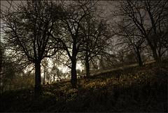 ...Hühnervolk... (shallowcreek) Tags: baum tree licht light fantasy