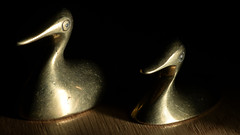 Attention on eyes (brighter) (PChamaeleoMH) Tags: flash ducks brass macro ornament home indoors