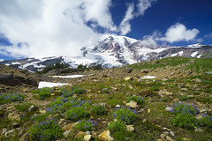Rainier Skyline Vista (RobertCross1 (off and on)) Tags: a7rii alpha cascaderange cascades emount fe1635mmf4zaoss ilce7rm2 mtrainier mtrainiernationalpark pacificnorthwest paradise sony wa washington bluesky clouds flowers fullframe glacier hiking landscape lupine mirrorless mountains peak snow trail trees volcano wildflowers