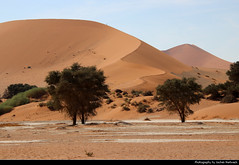 Big Mama Dune, Namib-Naukluft NP, Namibia (JH_1982) Tags: big mama dune desert wüste desierto red rot dunes dünen sand sanddünen trees tree duna 沙丘 砂丘 사구 дюна namib naukluft np nationalpark national park pn parque nacional parc landscape nature scenery scenic 納米布沙漠 ナミブ砂漠 나미브 사막 намиб 荒漠 砂漠 пустыня namibia namibië 纳米比亚 ナミビア 나미비아 намибия