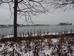 """""""I go to nature to be soothed and healed, and to have my senses put in order.""""  - John Burroughs (Trinimusic2008 -blessings) Tags: cold marina ducks gratitude asharedpath waterfrontrecreationaltrail lakeontario lake trees trinimusic2008 judymeikle nature toronto to ontario canada"""