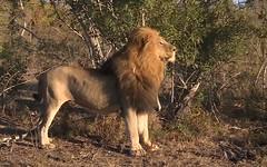 Anglų lietuvių žodynas. Žodis South Africa reiškia Pietų Afrika (šalis) lietuviškai.