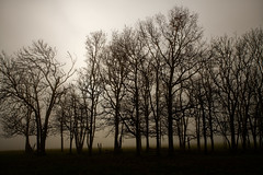 Brume sur Beurey (Glc PHOTOs) Tags: 20191205143805glc5822nikond85031mmdxo glcphotos nikon d850 fx full frame 45mpixel tamron sp 2470mm f28 di vc usd g2 tamronsp2470mmf28divcusdg2 a032 fog brouillard brume paysage arbres