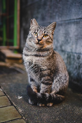猫 (fumi*23) Tags: ilce7rm3 sony sel35f18f emount 35mm feline fe35mmf18 a7r3 animal alley cat chat gato katze neko street ねこ 猫 ソニー 路地