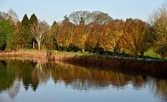 AUTUMN REFLECTIONS (chris .p) Tags: bodenham arboretum worcestershire nikon d610 uk england water trees reflections autumn 2019 view capture november tree autumncolours