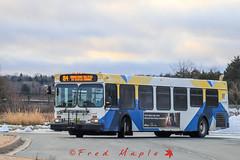 IMG_1539 (1fredmaple) Tags: halifaxtransit hfxtransit transit bus transitbus transitphotography newflyerbus newflyerindustries newflyerd40lf newflyer hfxtransit1106 hfxtransitroute84