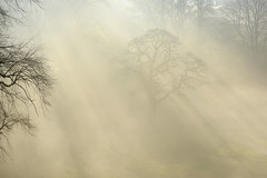 Emergence (Tony Tooth) Tags: nikon d600 nikkor 105mm fog mist foggy tree trees park december broughpark leek staffs staffordshire