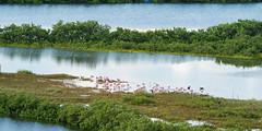 SouthPadreIsland_297-2 (allen ramlow) Tags: south padre island birding nature center landscape wildlife sony alpha travel day
