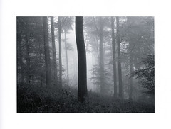 Cool  Mist (Wolfgang Moersch) Tags: fp4 tanol kallitype sodiumacetatedeveloper mt10goldtoner