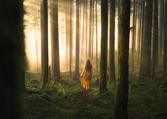 Woodland Ambience (Elizabeth Gadd) Tags: forest trees sunlight sunbeams sun beams fog gold green fairytale moss mossy tall straight trunks path secret magical rays sunrays god woman girl lady dress walking nature landscape portrait woods