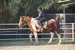 Mia sorella a lezione di equitazione (Giovanni Santori) Tags: cavallo ippica equitazione animali